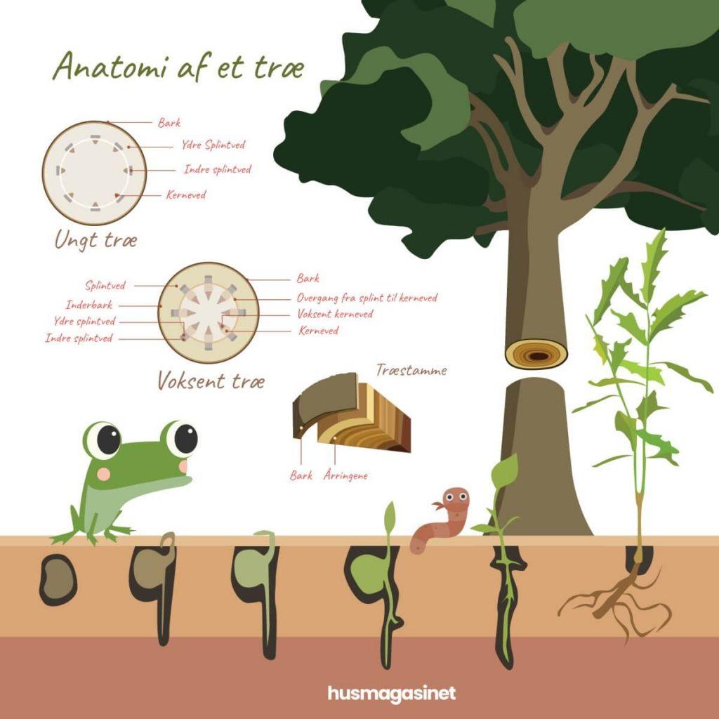 fra frø til træ husmagasinet