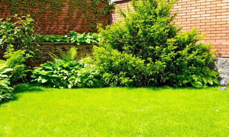 hækplanter til haven