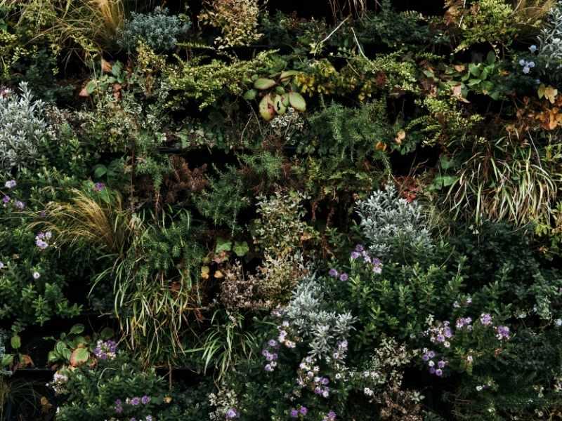Forskellige planter i haven